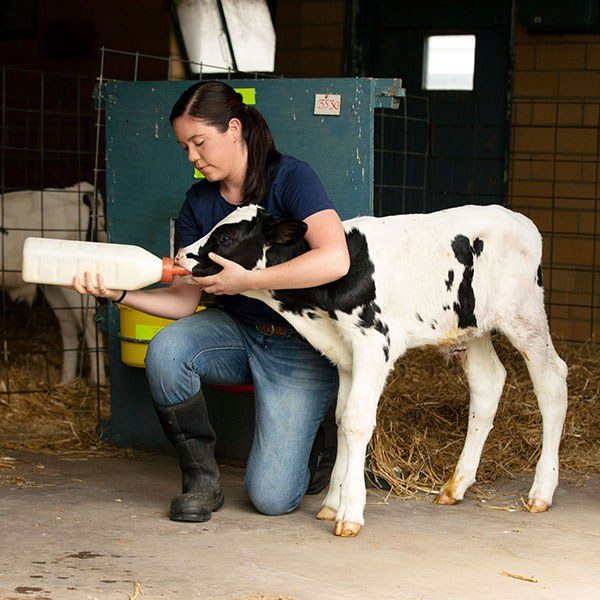 Animal science degree and career options