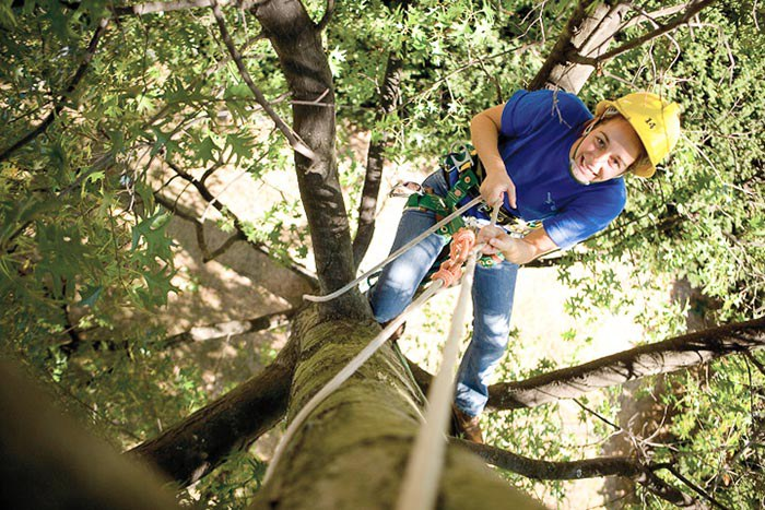 Arborists maintain trees and shrubs, improving the appearance, health, and value of trees.