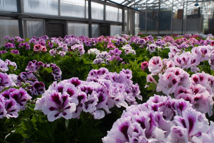 Horticulture Plant Science option is focused on the production and physiology of horticultural crops.