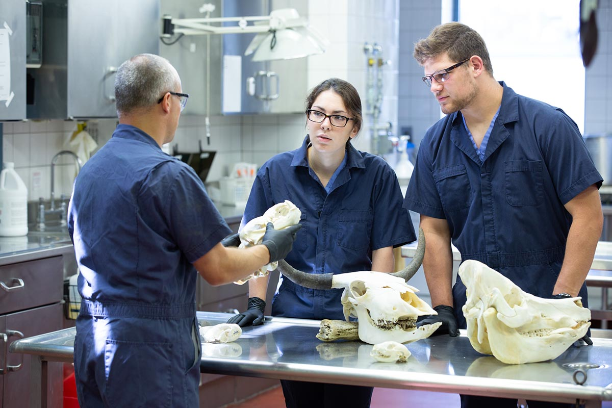 Penn State students work in the lab.