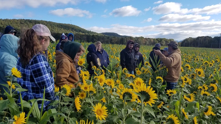 Penn State Agronomy students and professor in a field of sunflowers.