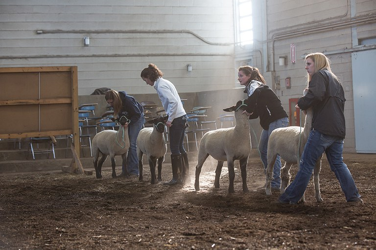 Consult with our undergraduate program coordinator for your admission to the Animal Science minor.