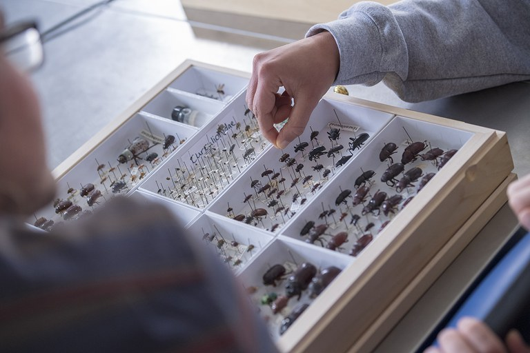 Entomology students looking at a beetles collection.
