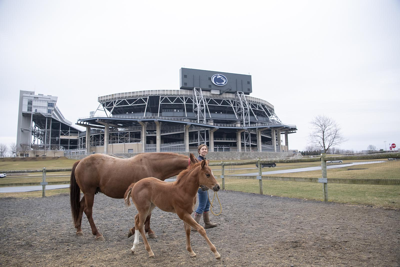 A horse and a foal during ground training.