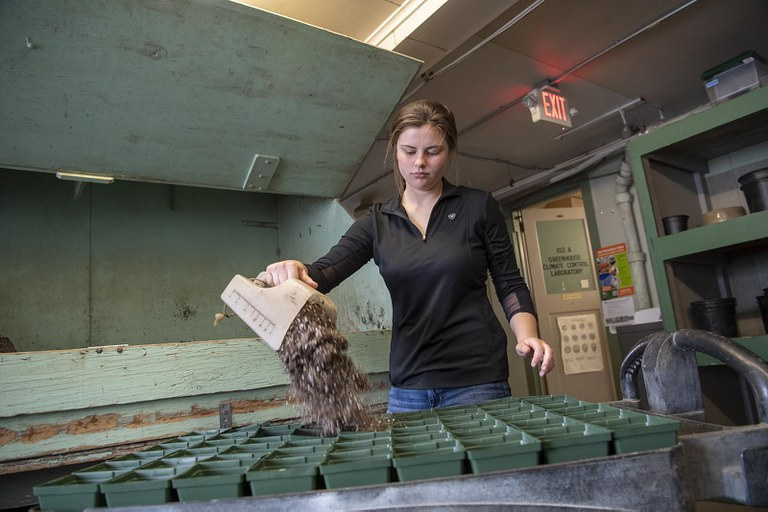 A horticulture student filling seedling trays with soil before replanting.
