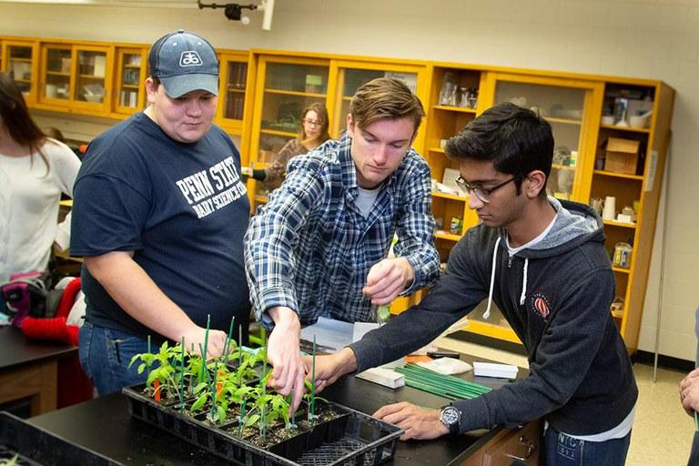 Penn State students transplanting seedlings.