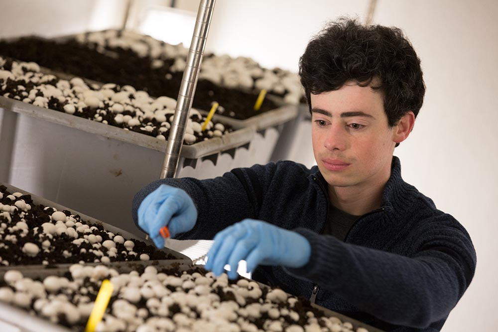 Penn State student growing mushrooms in the Mushroom Research Center.