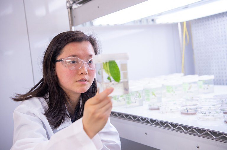 A Penn State student examining a plant in the lab.