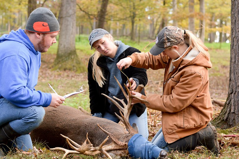Students examining a deer's antlers in the field.