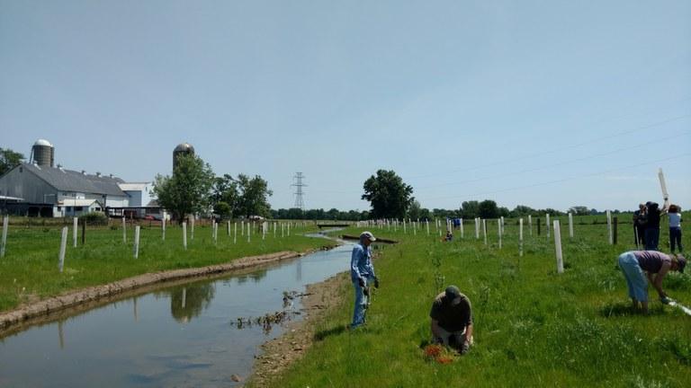 Mill Creek Riparian Buffer Planting