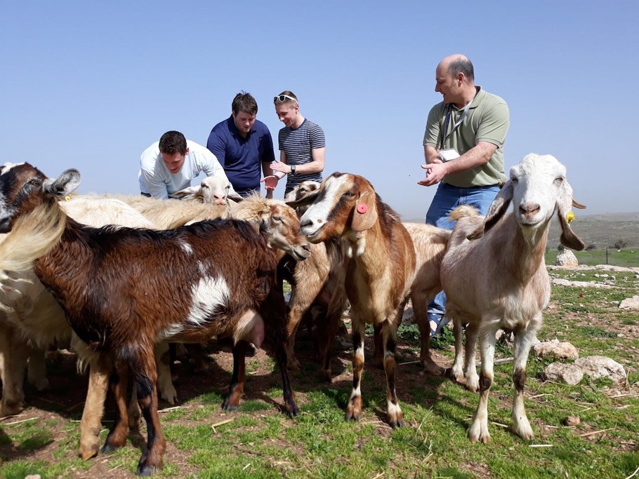 Who's herding who? Students and professors herded goats during their spring break 2018 trip to Israel to learn how leadership requires constant communication. Left to right: Aiden Smith, Thomas Hannan, Benjamin Cutler and Mark Gagnon. Image by Anne Hoag.