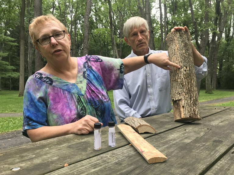 Penn State RAIN grant winners Dr. Kelli Hoover and Dr. John Janowiak show the damage to an ash log from the invasive emerald ash borer.