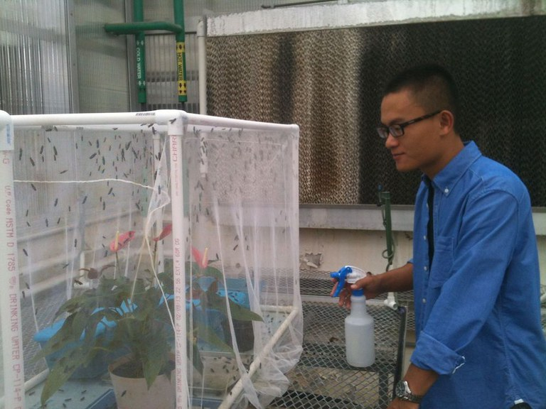 "Fengchun ""Spring"" Yang, founder of Symton BSF, tends black soldier flies in September 2013 as a senior at the College of Agricultural Sciences."