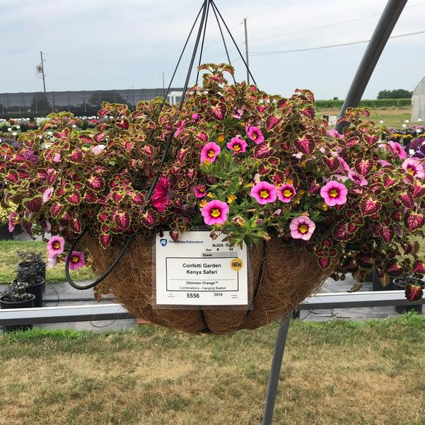 Combinations - Hanging Basket 'Kenya Safari'