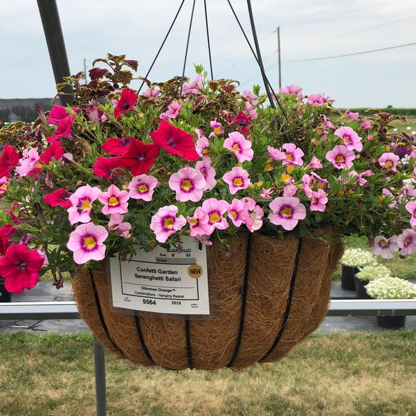 Combinations - Hanging Basket 'Serenghetti Safari'