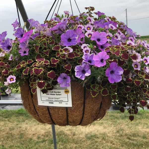Combinations - Hanging Basket 'Still Water Safari'