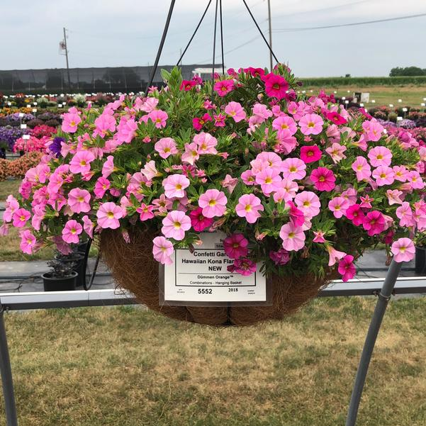 Combinations - Hanging Basket 'Hawaiian Kona Flamingo'