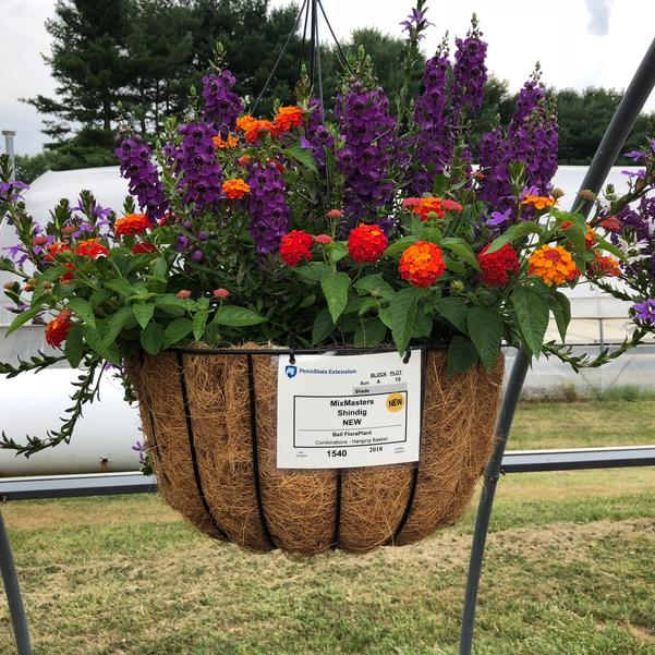 Combinations - Hanging Basket 'Shindig'