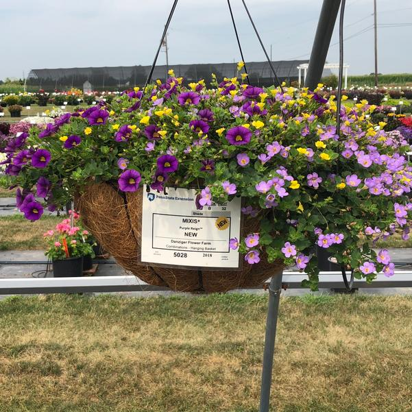 Combinations - Hanging Basket 'Purple Reign™'