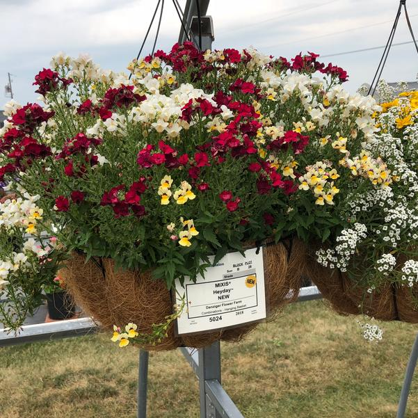 Combinations - Hanging Basket 'Heyday™'