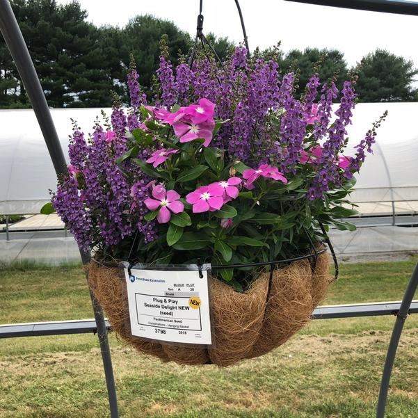Combinations - Hanging Basket 'Seaside Delight (seed)'