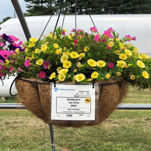 Combinations - Hanging Basket 'Tea Party'