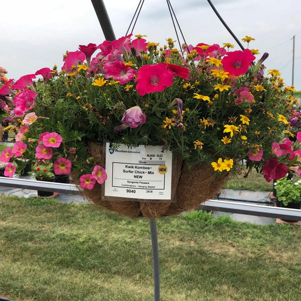 Combinations - Hanging Basket 'Surfer Chick™ Mix'