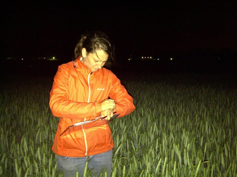 Ariel conducting night fieldwork at CIMMYT