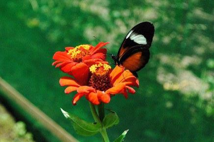 Finca ViaLig Butterfly Farm