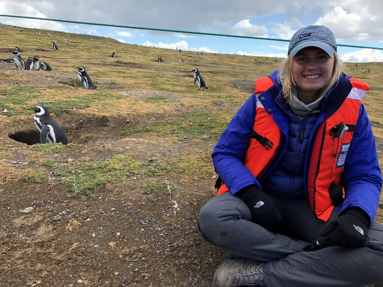 We took a ferry ride to an island off of Punta Areanas where nesting Magellanic penguins were currently living!