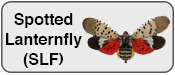 Spotted Lanternfly Updates