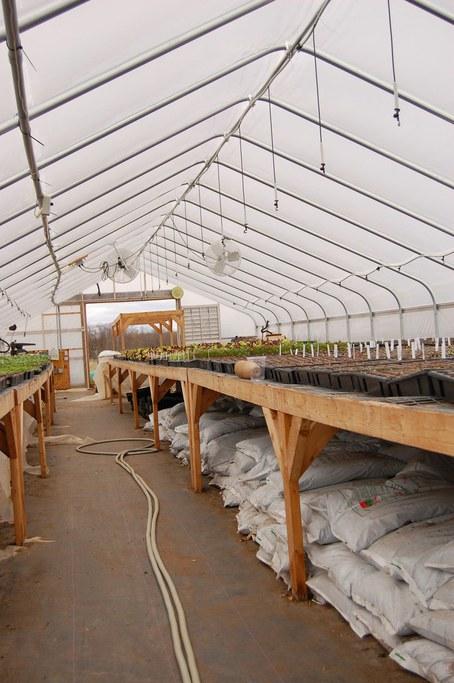 Inside M&M greenhouse