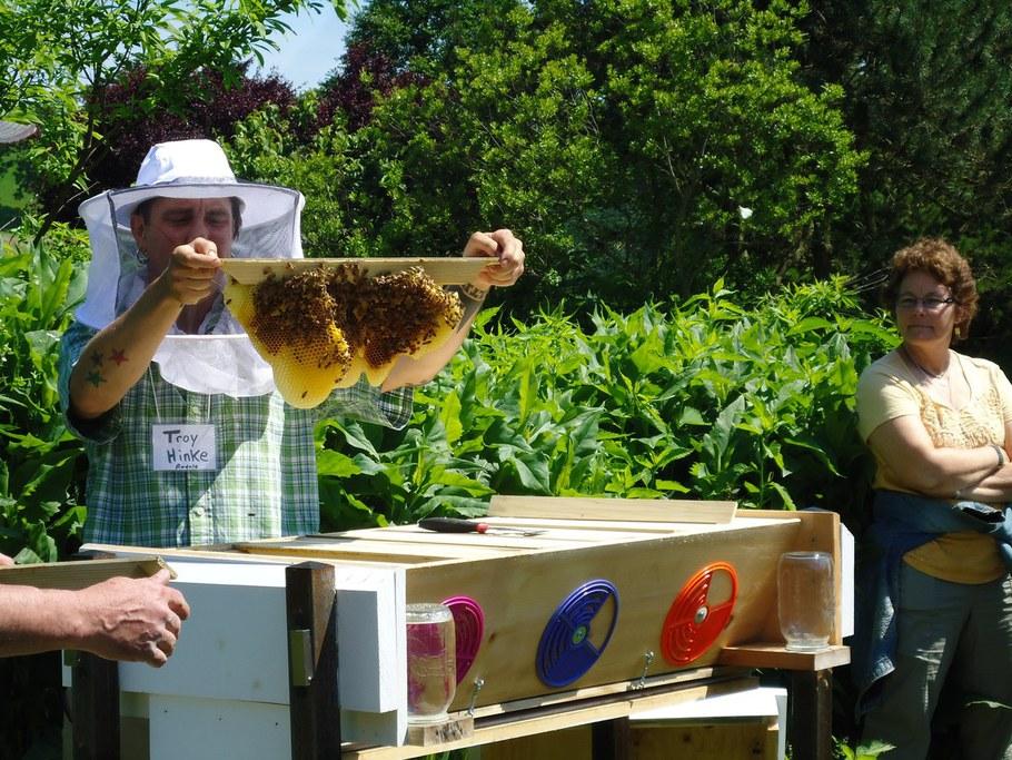 Honeybees at Rodale