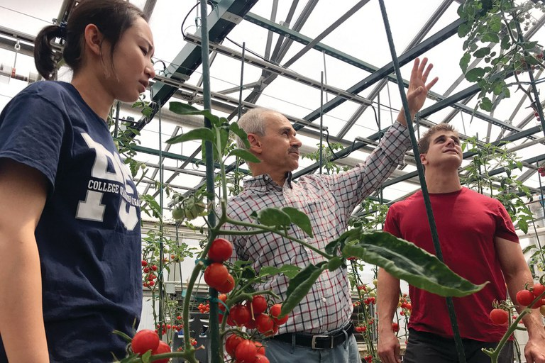 """Majid Foolad, professor of plant genetics, center, discusses his tomato breeding program with Mengyuan """"Maggie"""" Jia, doctoral candidate in plant biology, left, and Jonathan Bonfiglio, master's degree candidate in horticulture."""