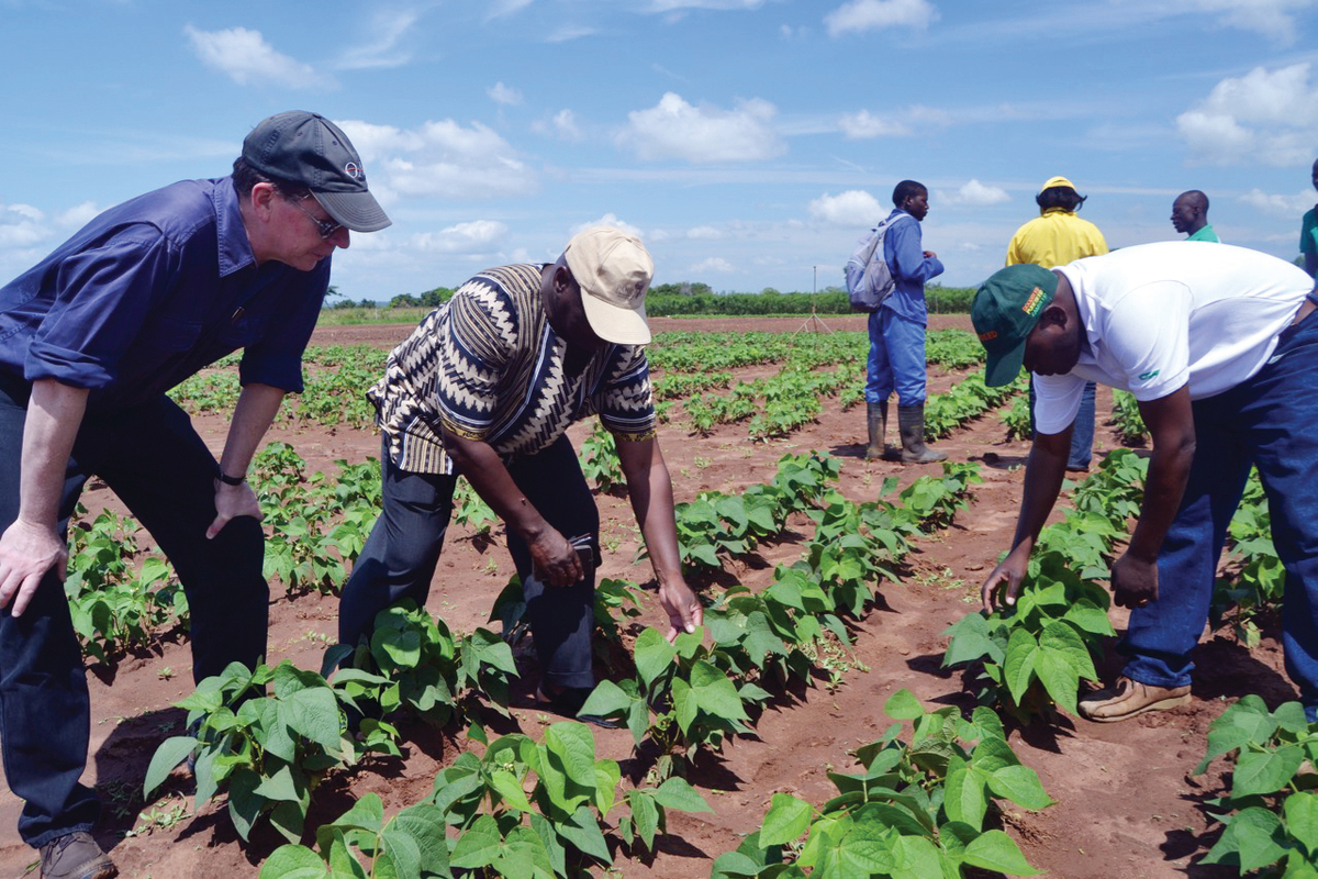 Jonathan Lynch, Manuel Amane, and Magalhaes Miguel evaluate new bean varieties in a low-phosphorus research field at Sussundenga, Mozambique