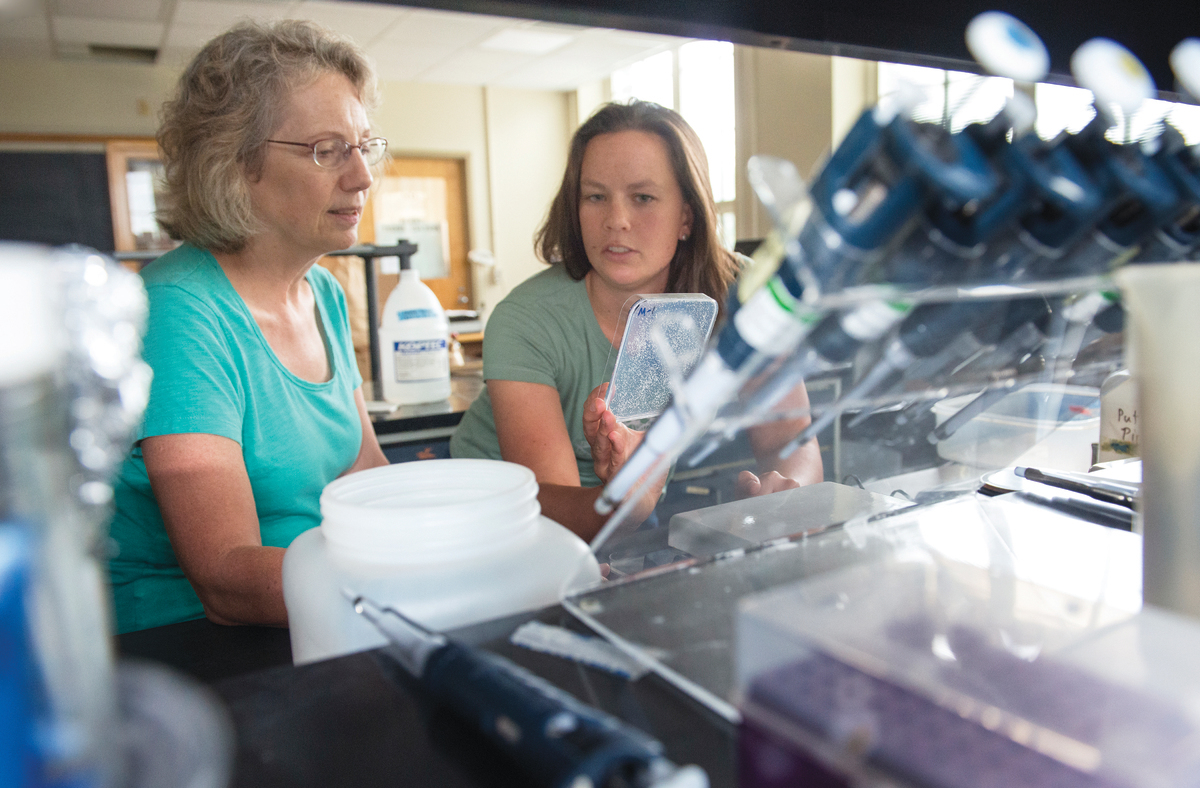 Plant biologist Kathleen Brown and graduate student Molly Hanlon examine a plate of seedlings in the Roots Lab. Planting a combination of crop varieties that thrive under different conditions could shield farmers in poor areas from total disaster.