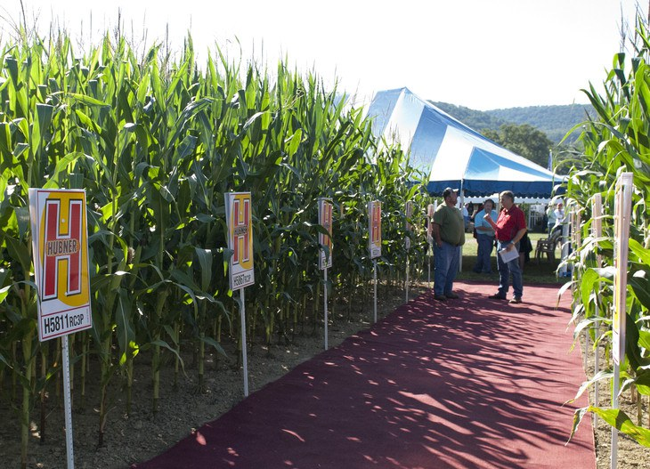 Visitors to Ag Progress Days were able to examine a variety of contemporary corn seed and  corn crops produced by Pennsylvania Corn Growers Association during the three day event held at Penn State's Russell E. Larson Agricultural Research Center at Rock Springs. Ag Progress Days features the latest technology and changing management practices in the agricultural industry and is attended by more than 40,000 people annually.  IMAGE: Patrick Mansell