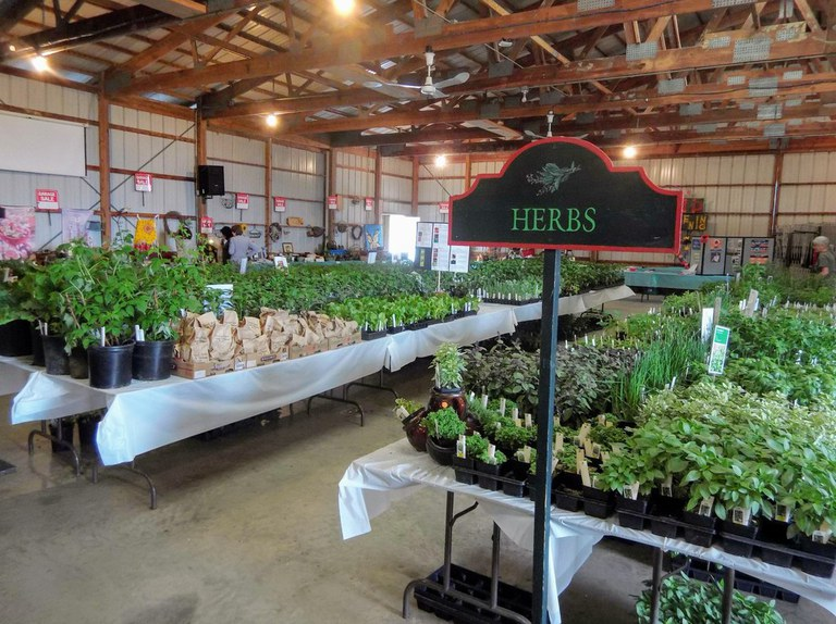 Herbs are among the many types of plants that will be available at the 2019 Penn State Extension Master Gardeners of Centre County annual plant sale. IMAGE: PENN STATE EXTENSION